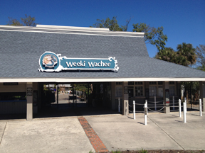 Week Wachee. Go there. Watch mermaids. Live the moment.