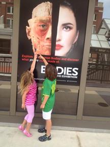 The Bodies exhibit ...